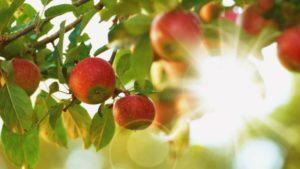 image of Seminar over ontwikkelingen en kansen in de Fruit-keten in Rusland en Kazachstan